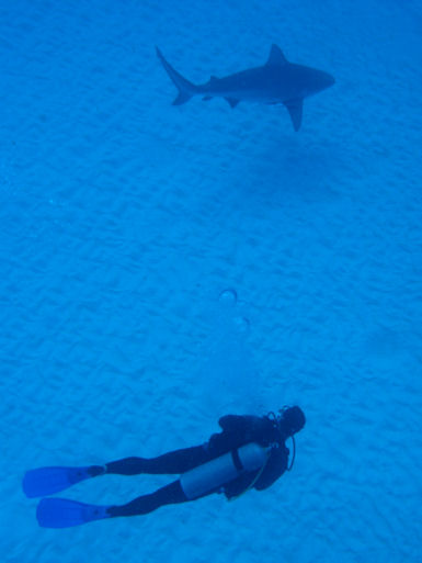Bullsharks in Mexico